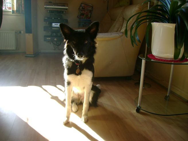 Min hund Viva 2