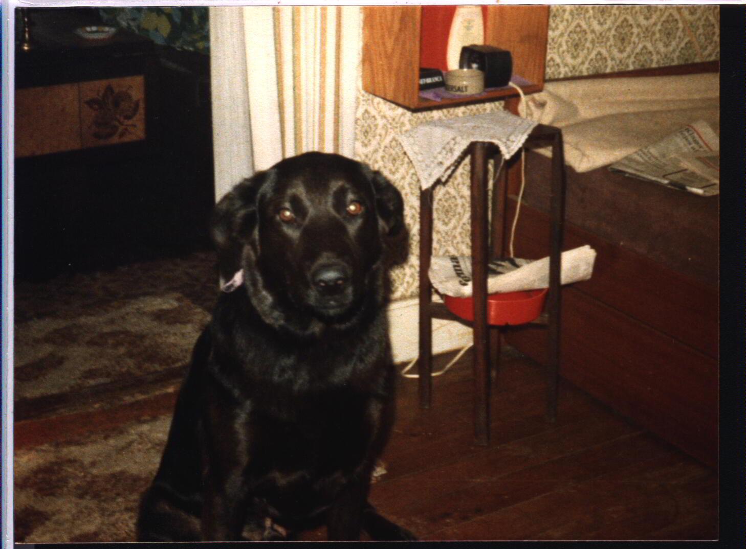 Min hund Wiski